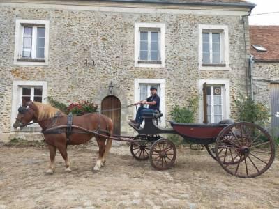 Jument bretonne attelage