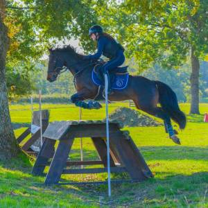 Poney exceptionnel en CROSS