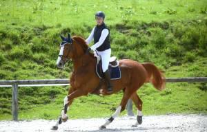 Magnifique cheval de loisir polyvalent