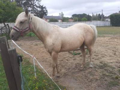 Jument quarter horse 6 ans