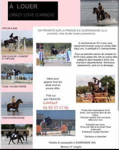 Location poney cso et cce elite/as 2