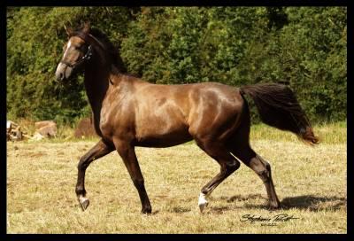 Chic poney de sport