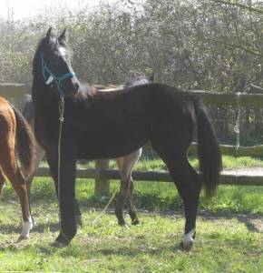 Patsy du tr - quarter horse 2020 (f)