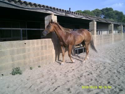 Vente de cheval