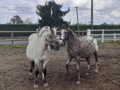 Vente poney