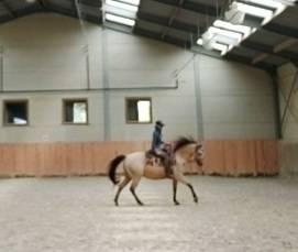Demi pension quarter horse