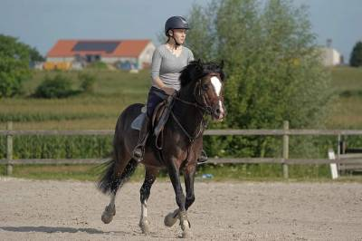 Poney entier jumping