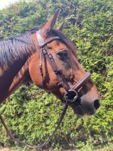 Extra cheval