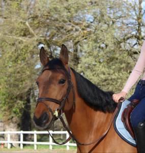 Demi-pension pour cheval