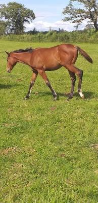 Foal ps