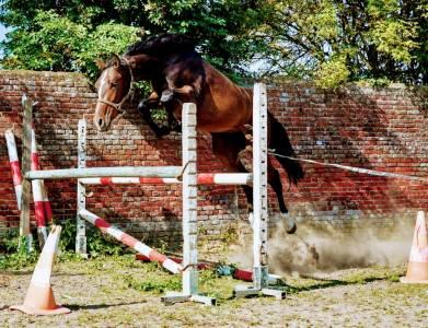 Bel étalon 2 ans prometteur, jumping