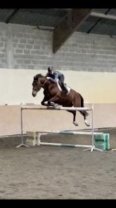 Recherche chevaux à confier sous contrat