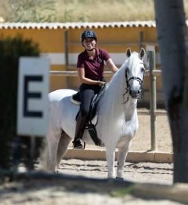 Viriato - magnifique cheval polyvalent hyper sûre.