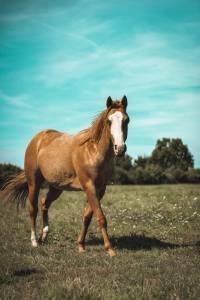 Paint horse 2019 (hongre) - stetson du tr