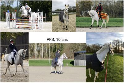 Poney à prendre en demi-pension à Juigné sur Loire (49)