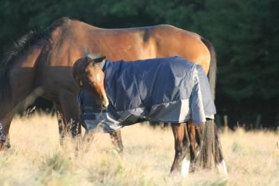 Foal mâle aa 2021 origines cce