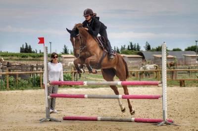 Cheval de sport anglo arabe cso