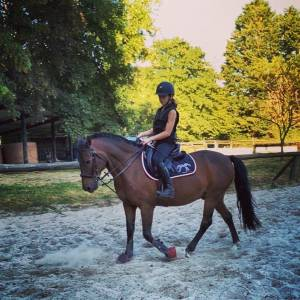 Poney c newforest exceptionnel
