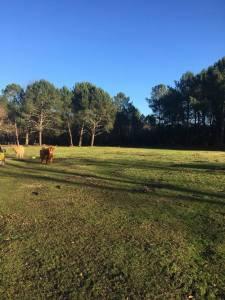 propriété 12 hectares Bassin Arcachon