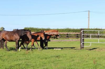 Pension chevaux proche le Neubourg