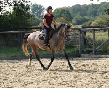 Bon poney, gentil et qualiteux - prend 4 ans
