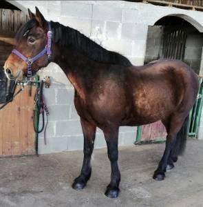 Super cheval maitre d'école 13 ans