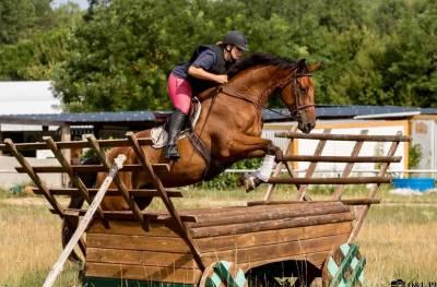 Demi pension cheval