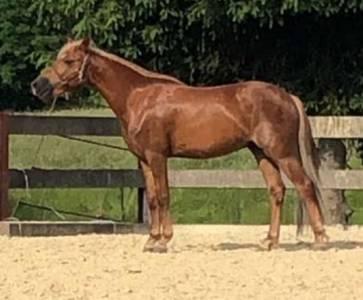 Super poney à vendre