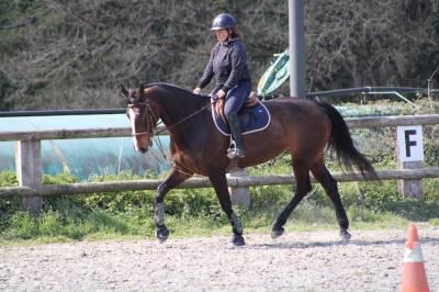 Poste de monitrice d'équitation ou palefrenier soigneur