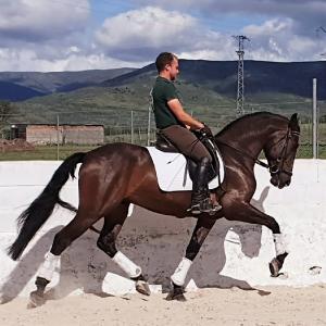 Duende - très bon cheval pre polyvalente
