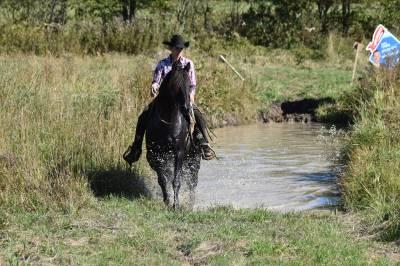Jument cheval canadien, jument de 12 ans, 151cm