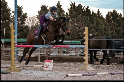 vente cheval