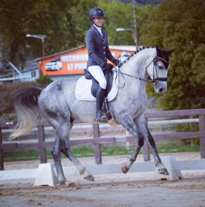 Dp adorable cheval selle français de 7 ans st blaise
