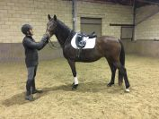 HOMEBRED TOP DRESSAGE PROSPECT by GOODTIMES