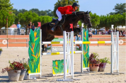 Welsh Pony (Section D), Welsh Cob  Te koop 2006 Zwart