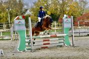 Welsh Pony (Section B) Te koop 2010 Vos ,  ESCLEY THIMBLE (GBR)